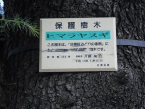 ヒマラヤ杉看板